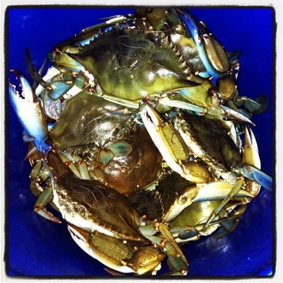 Blue Crabs - Crab Rangoon - A Family Feast
